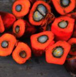 Palmöl 149x151 - Ist Palmöl gesund? Oder doch Krebserregend?