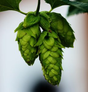 Alkoholfreies Bier nach dem Training