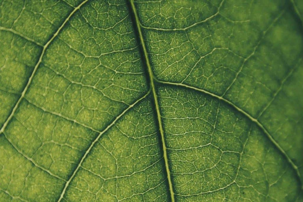 Warum ist Chorophyll grün?