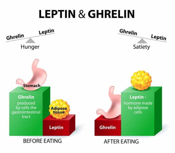 Ghrelin und Abnehmen